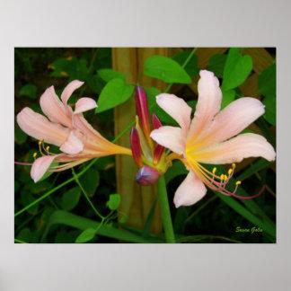 Botanical Belladonna Pink Lily Floral Print