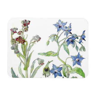 Botanical Borage Wildflower Flowers Floral Magnet