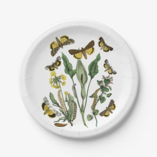 Botanical Butterfly and Moth Natural Vintage Plate