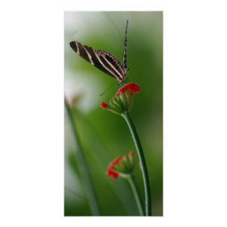 Botanical Butterfly Poster