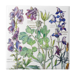 Botanical Columbine Wildflower Flowers Tile