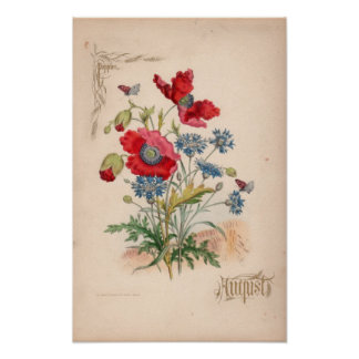 Botanical Engravings, August Poster