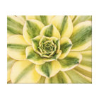 Botanical, Green Succulent photograph on canvas