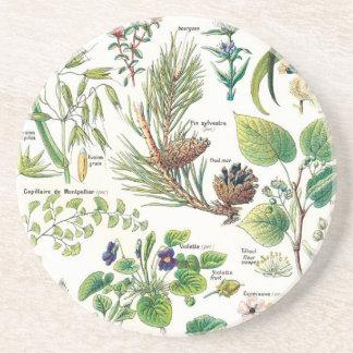 Botanical Illustrations Coaster