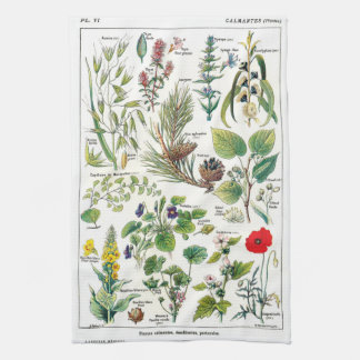 Botanical Illustrations Kitchen Towel