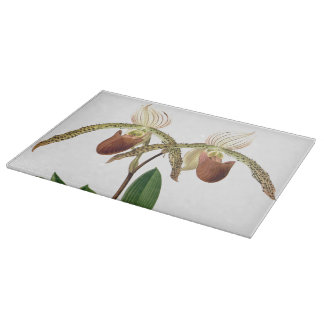 Botanical Ladys Slipper Orchid Flowers Floral Boards