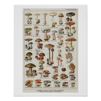 Botanical Mushrooms Chart Poster