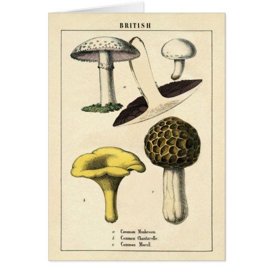 Botanical Print - British Mushrooms & Fungi Card