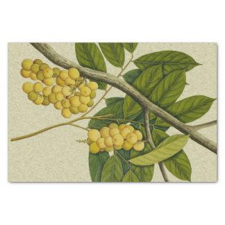 Botanical print Lanzones Tissue Paper