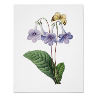 Botanical print of BLUE BELLS original by Redoute