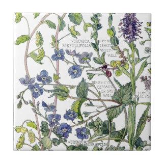 Botanical Speedwell Wildflower Flowers Tile
