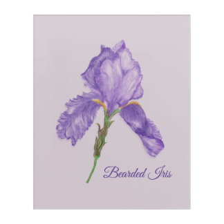 Botanical Style Purple Iris, Colored Pencil Art