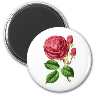 Botanical Tea Rose Magnet