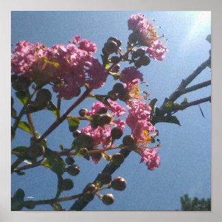 Botanique naturel de fleurs roses froncées affiche