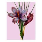 Botany: Saffron Postcard