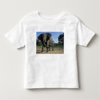 Botswana, Chobe National Park, Aggressive Bull Toddler T-shirt