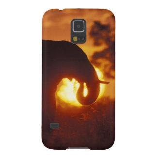 Botswana, Chobe National Park, Bull Elephant Galaxy S5 Covers