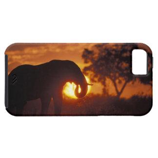 Botswana, Chobe National Park, Bull Elephant iPhone 5 Case