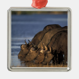 Botswana, Chobe National Park, Cape Buffalo Metal Ornament