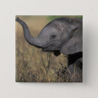 Botswana, Chobe National Park, Young Elephant 2 Inch Square Button