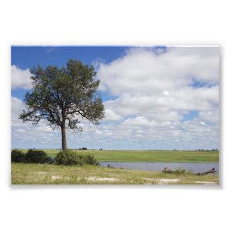 Botswana Landscape Photo Print