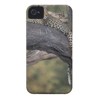 Botswana, Moremi Game Reserve, Adult Female 2 iPhone 4 Case-Mate Case