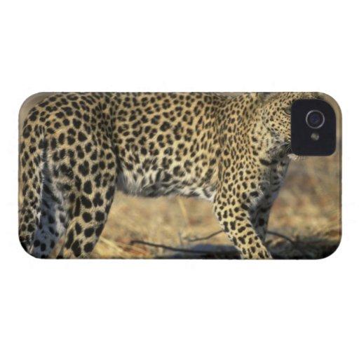 Botswana, Moremi Game Reserve, Adult Female Blackberry Bold Covers