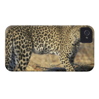 Botswana, Moremi Game Reserve, Adult Female Case-Mate iPhone 4 Cases
