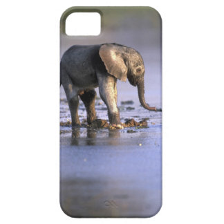Botswana, Moremi Game Reserve, Young Elephant iPhone 5 Cover