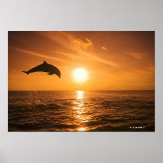 Bottlenose Dolphin jumping 2 Poster