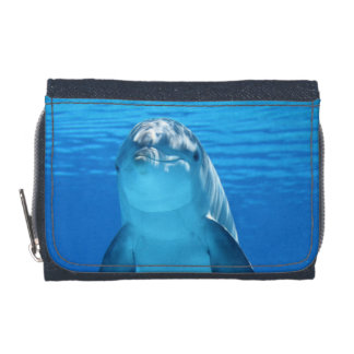 Bottlenose Dolphin looks at the camera under water Wallets