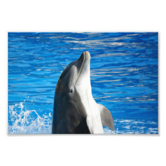 Bottlenose Dolphin Photo Print