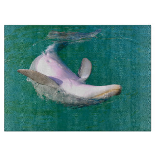 Bottlenose Dolphin Upside Down Boards