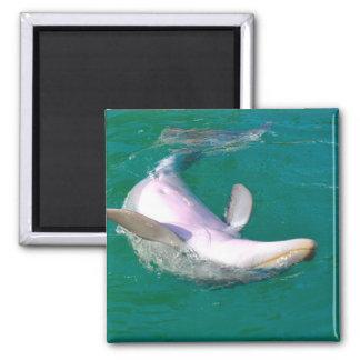 Bottlenose Dolphin Upside Down Magnet
