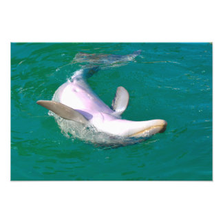Bottlenose Dolphin Upside Down Photo Print