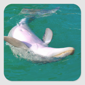 Bottlenose Dolphin Upside Down Square Sticker