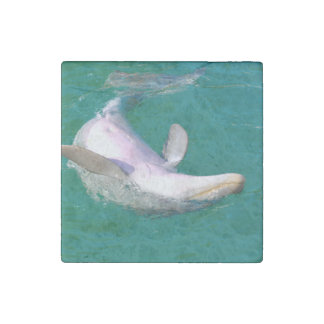 Bottlenose Dolphin Upside Down Stone Magnets