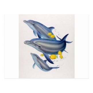 Bottlenose Dolphins in Concert Postcard