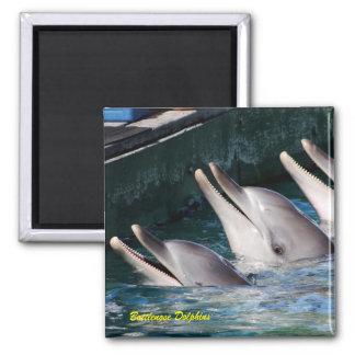 Bottlenose Dolphins Square Magnet