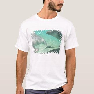 Bottlenose Dolphins Tursiops truncatus) 19 T-Shirt