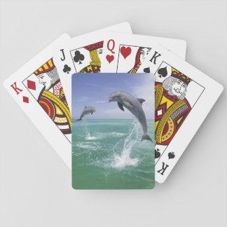 Bottlenose Dolphins Tursiops truncatus) 4 Playing Cards