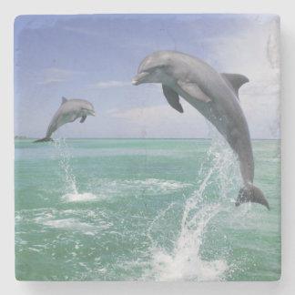 Bottlenose Dolphins Tursiops truncatus) 4 Stone Coaster