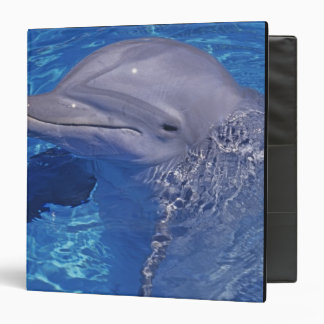 Bottlenosed Dolphin, Tursiops Truncatus 3 Ring Binder