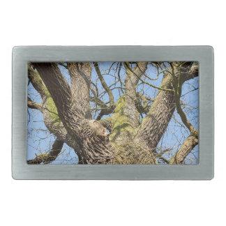 Bottom view oak tree without leaves in winter belt buckle