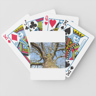 Bottom view oak tree without leaves in winter bicycle playing cards