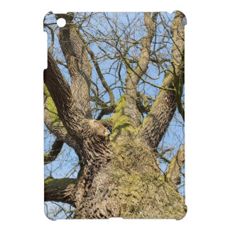 Bottom view oak tree without leaves in winter cover for the iPad mini