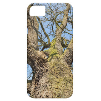 Bottom view oak tree without leaves in winter iPhone 5 cases