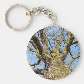 Bottom view oak tree without leaves in winter keychain