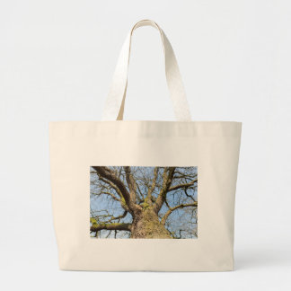 Bottom view oak tree without leaves in winter large tote bag