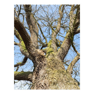 Bottom view oak tree without leaves in winter letterhead